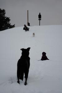 Adirondack Sledding